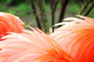 plumes de flamant rose photo