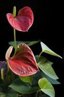 fleur de flamant rose dans le dos noir