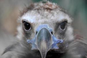 vautour photo