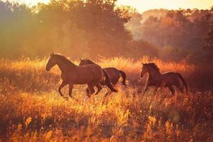 cheval photo
