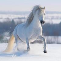 cheval blanc au galop photo