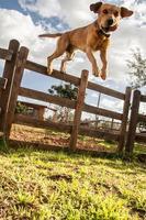 chien sautant photo