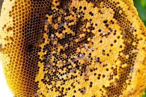 ruche d'abeilles photo