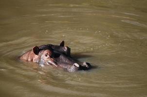 masai mara - kenya photo