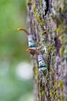 insecte photo