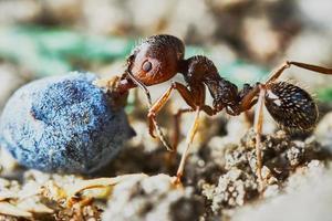 fourmi à l'extérieur dans le jardin photo
