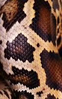 peau de serpent python et macro de modèle d'écailles photo