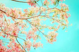 ton de couleur douce de fleur flamant photo