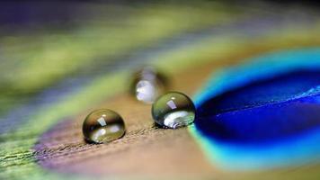 goutte d'eau sur plume de paon photo