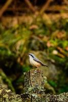 mélanger les oiseaux européens photo