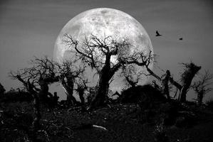forêt morte photo