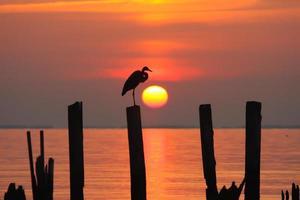 héron au lever du soleil