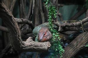 reptile coloré sur une branche d'arbre photo