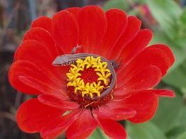 lézard sur fleur photo
