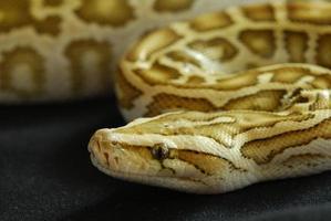 serpent photo