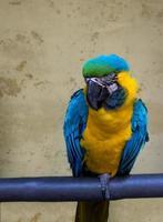 perroquet. photo