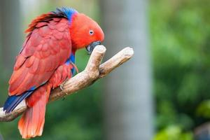 oiseau perroquet photo