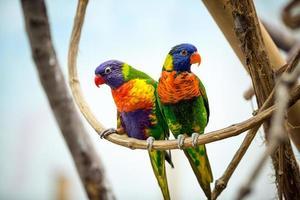 couple de perroquet photo