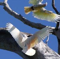 bourrasque de nidification photo