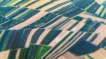 vue aérienne des champs verts et des pentes photo