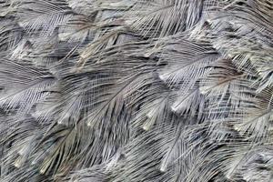 fond de plumes d'autruche (k) photo
