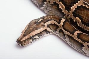reptiles sur fond blanc