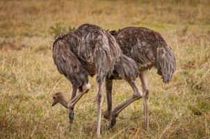 animaux au Kenya photo