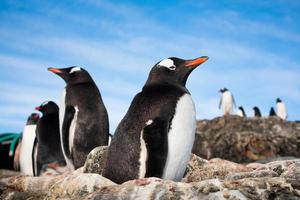pingouins en antarctique photo