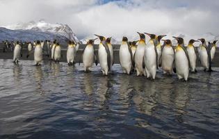 paradis des pingouins photo