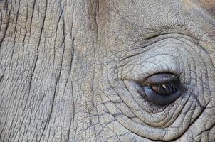 détail d'un œil grand rhinocéros à une corne