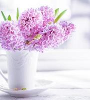 Jacinthes roses dans un vase blanc sur fond blanc photo