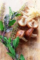 champignon photo