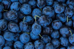 fond de prunes mûres photo