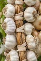 collier d'ail agriculture biologique photo