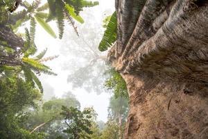 grand arbre photo