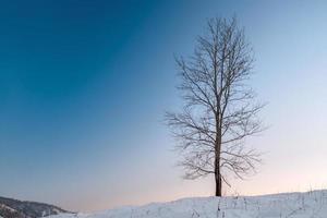 arbre photo