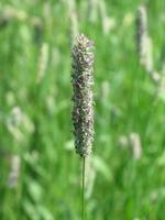 herbe sauvage photo