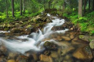 rivière forestière photo