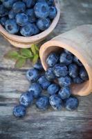 bleuets dans jardin photo