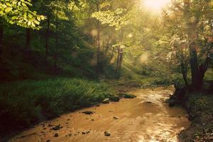ruisseau d'été photo