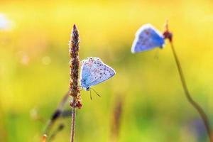 papillon d'été photo