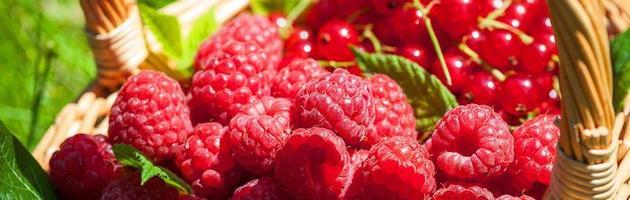 fruit d'été photo