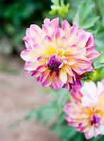 fleurs de fin d'été photo