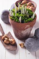 fleurs de printemps en pot. concept de printemps. photo