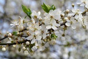 fleurs de printemps. photo