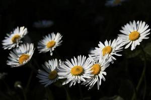 fleurs, printemps photo