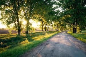 route forestière. paysage