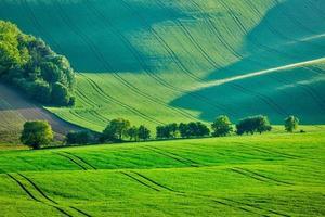 paysage d'été vallonné de la moravie photo