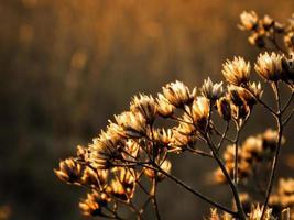 fleur d'hiver photo