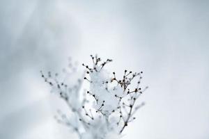 brindilles d'hiver photo